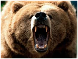 Bear Big Snarling Face on