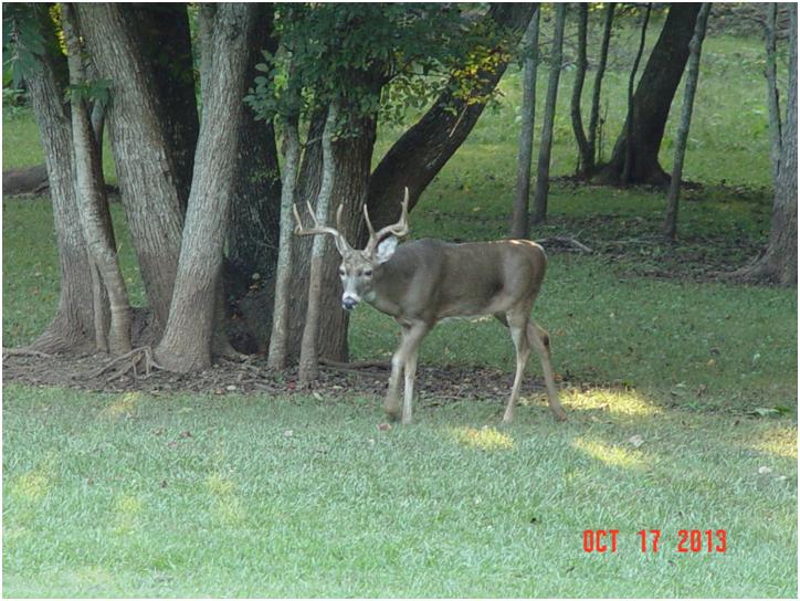 20131018 Buck A