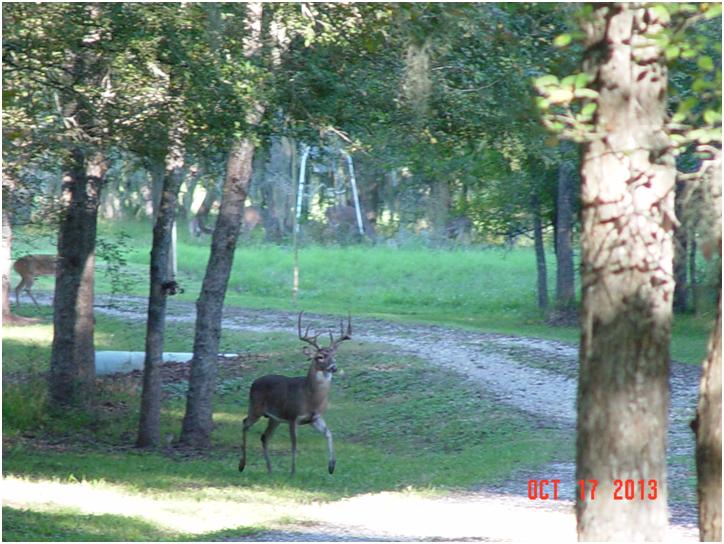 20131018 Buck